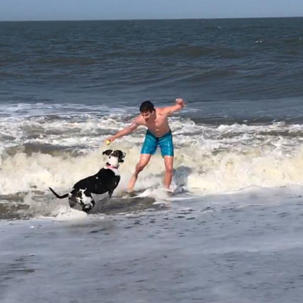 Adult Trained Dog Delilah