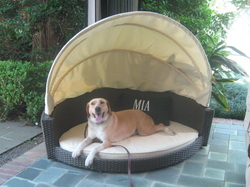Sold Adult Trained Dog Mia